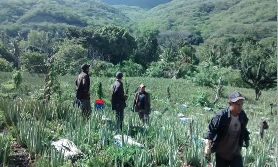 CAC community Aloe Farm in Guastatoya, Guatemala